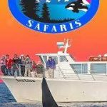 San Juan Safaris Whale & Wildlife Tours