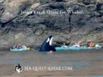 Sea Quest Kayak & Whale Tours
