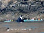 Sea Quest Kayak & Whale Tours