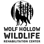 Wolf Hollow Wildlife Rehab Ctr.